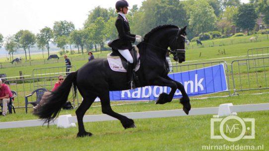 Op het CH Oranjewoud is er veel aandacht voor het Friese paard.