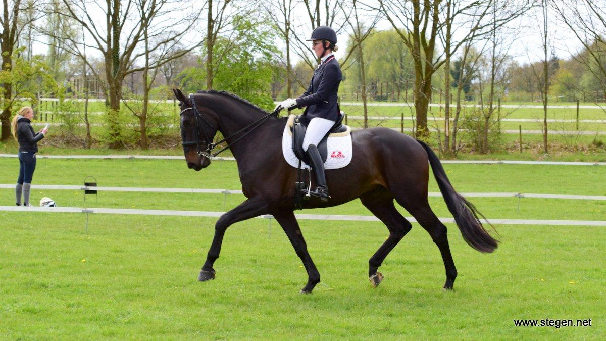 Koningsdagconcours Onstwedde. Cindy Stooker tijdens haar proef in de ZZ-licht met Fly Away.