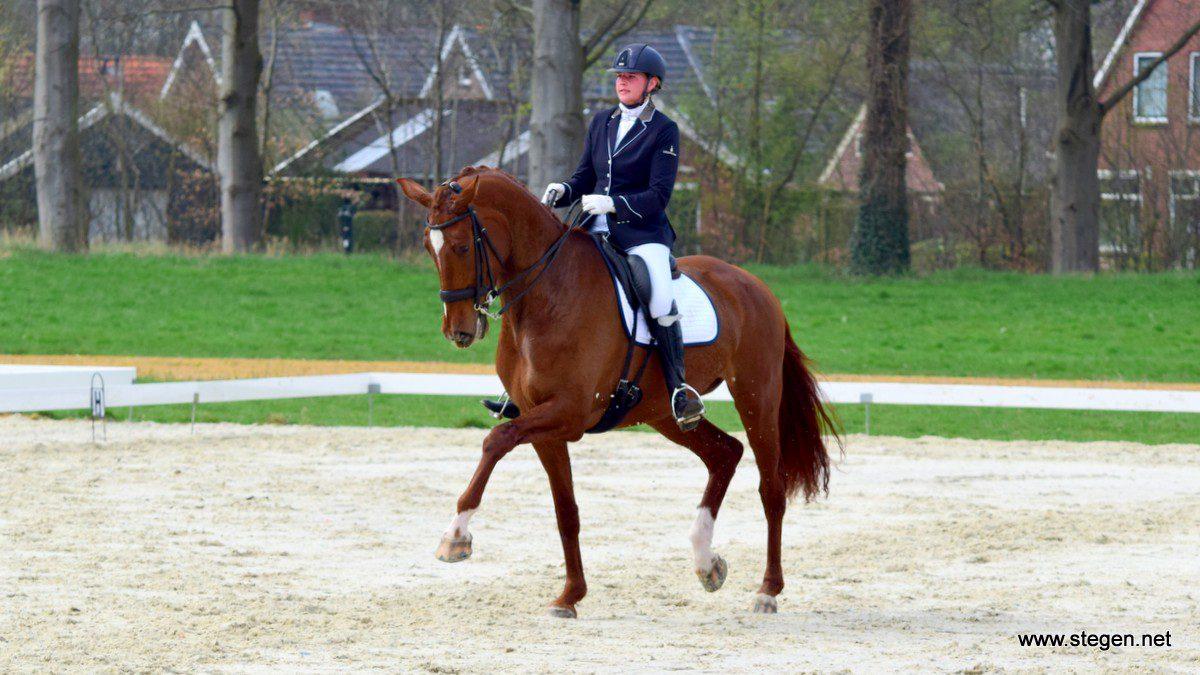 Elviera Boverhof won met Virginia het Z2 bij de Ossencompetitie Eext.
