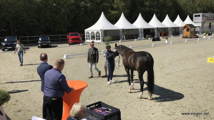 De veterinaire keuring op het EK-dressuur U25 in Exloo.