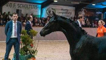 Oubalia duurste veulen op Final Foal Auction Exloo