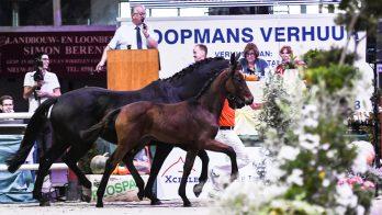 Final Foal Auction in Exloo: 'we gaan voor omzet in de breedte'