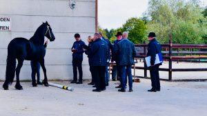Friese hengsten starten verrichtingsonderzoek in Exloo