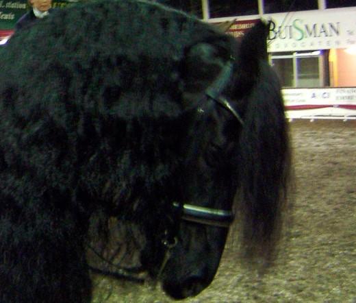 Vermoedelijk op vrijdagavond zijn er twee Friese paarden gestolen.