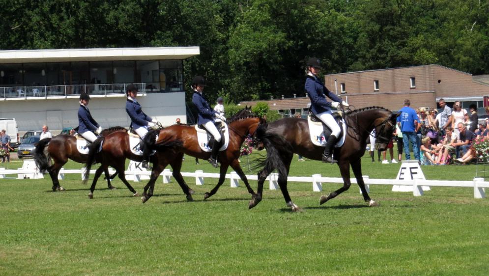 Column Helen de Koning: 'paardensport leeft in Groningen'