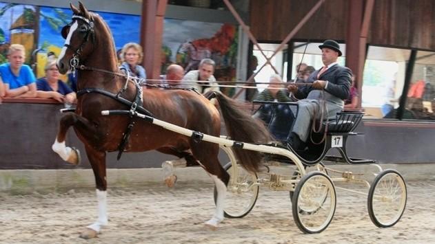 NIC Assen: Lambertus Huckriede wint met tuigpaardhengst Eebert