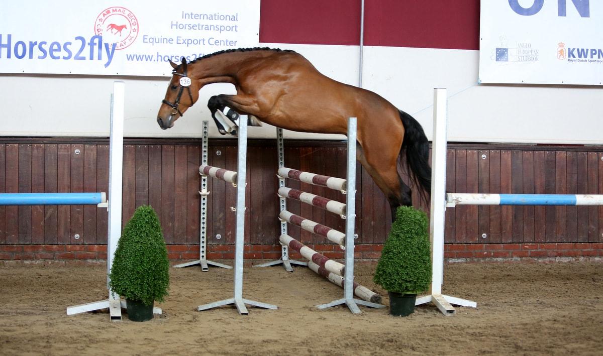 Goede paarden voor de jury bij derde selectie ONNK in Boijl