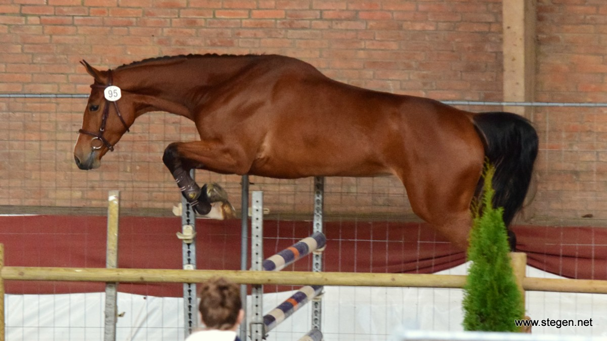 De vierjarige merrie Inia HC (v. Everglade VDL) was bij het ONNK in Winschoten het beste oudere springpaard.