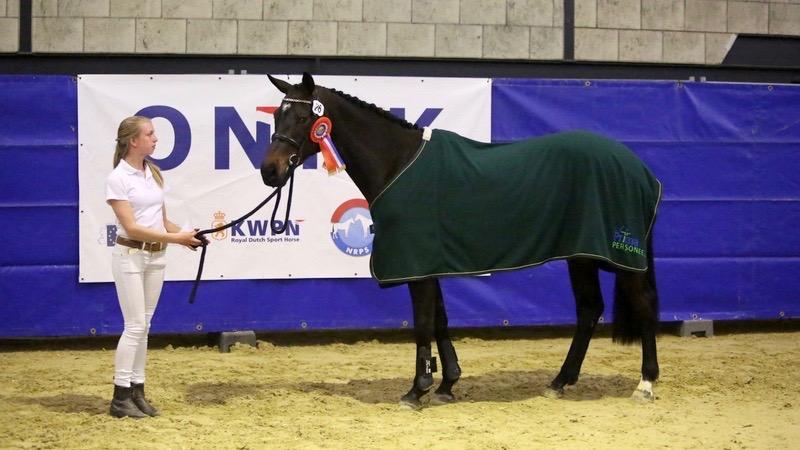 Finale ONNK. Irandalina werd kampioen bij de driejarige springpaarden.