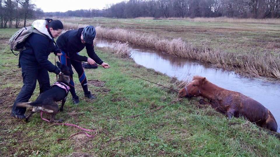 De reddingsactie van Kári. foto: Facebook | Judith van Ekeren