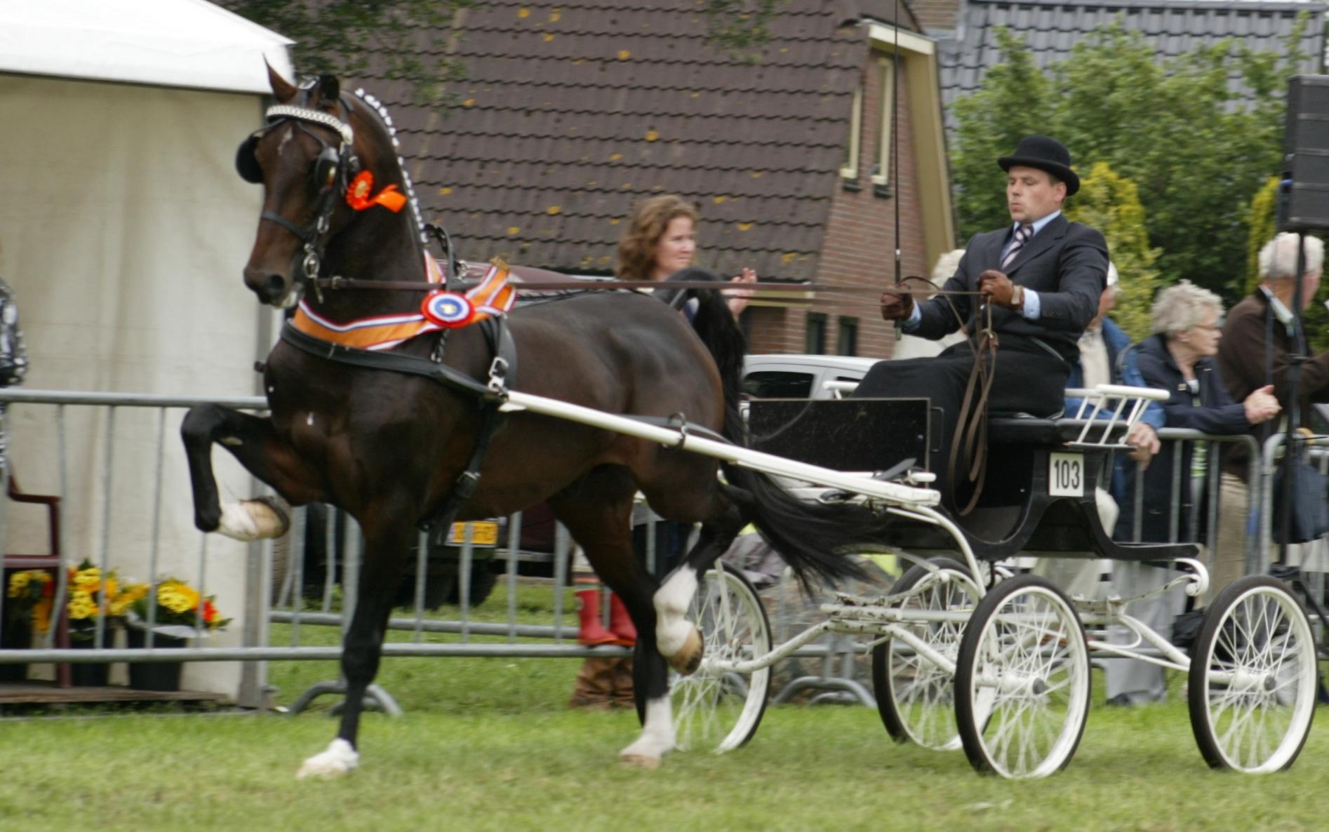 Klaas de Jong kampioen met tuigpaard Wantij