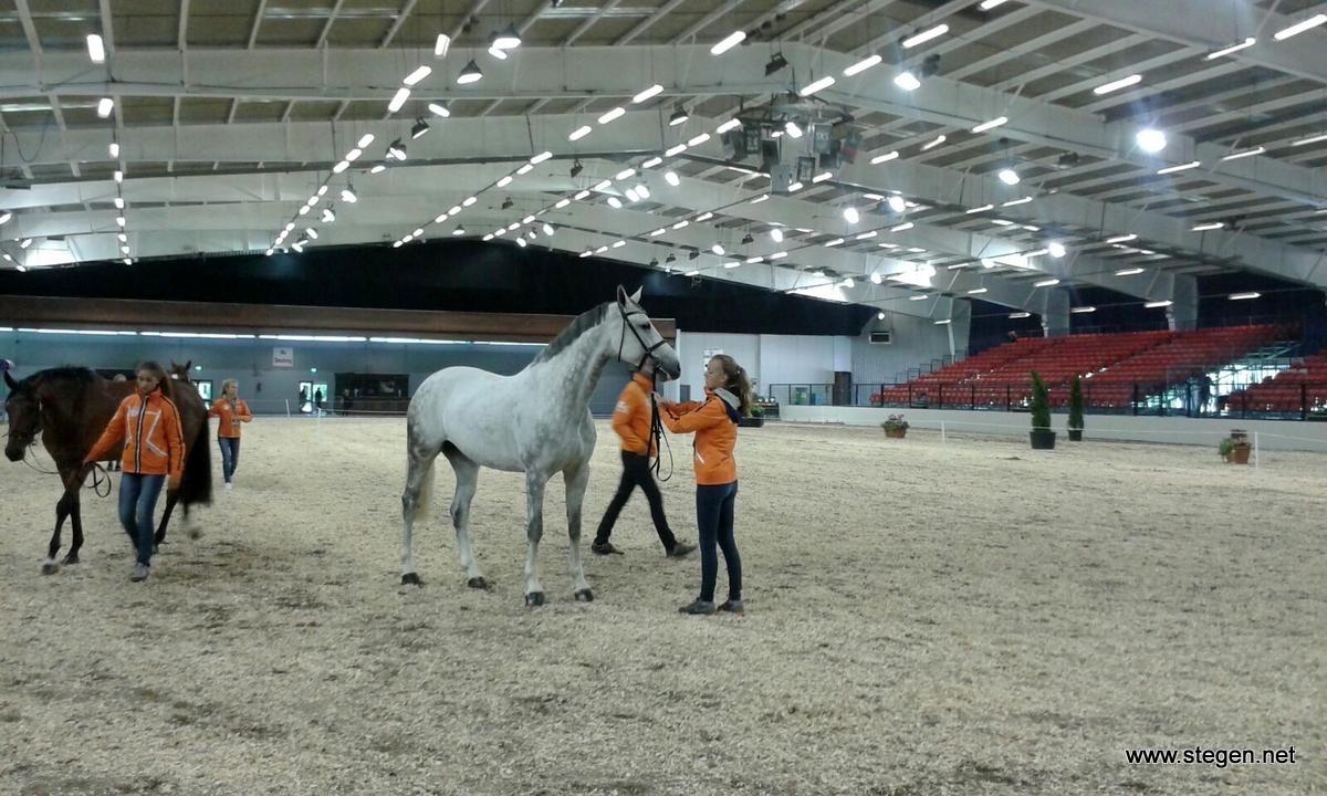Column Lysanne Kruizinga: 'na een lange reis alle paarden door de keuring op EK Millstreet'