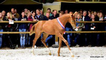 Nationaal kampioen Oristo duurste op jubilerende Veulenveiling Dwingeloo