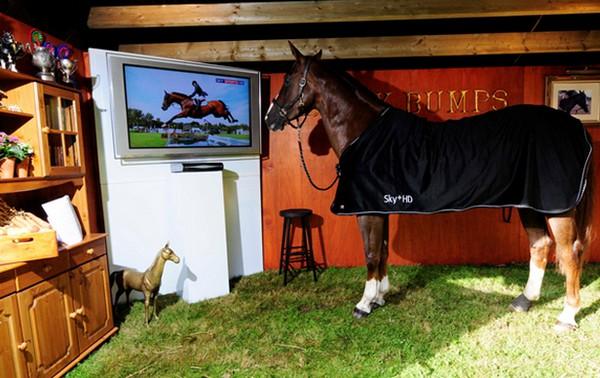 Gepensioneerd springpaard krijgt luxe stal met eigen TV