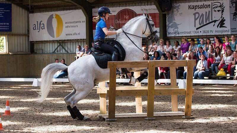 Oefenwedstrijd Working Equitation tijdens CH Coevorden