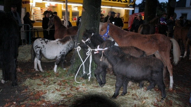 Meer aandacht voor welzijn op paardenmarkt