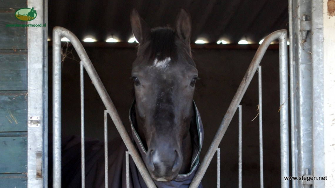 Vereniging het Groninger Paard heeft nieuw bestuur