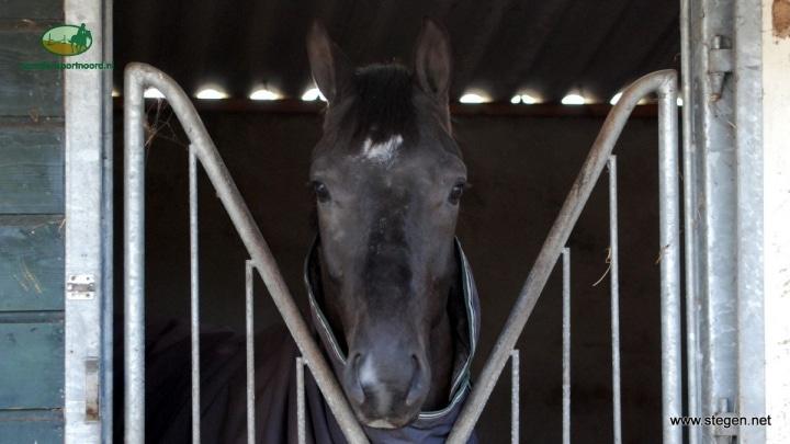 Rhinopneumonie vastgesteld in de Beemster