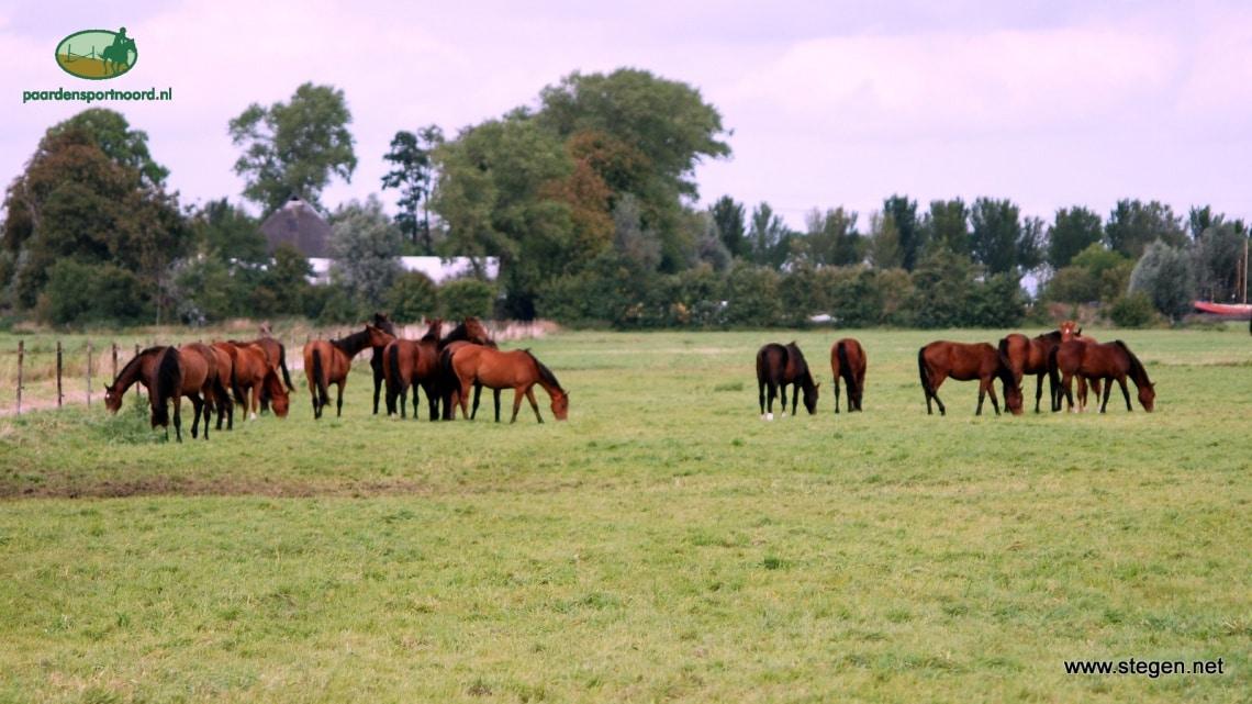 Paarden vanaf volgend jaar verplicht in landelijke database