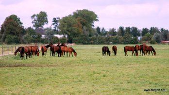 Sectorraad Paarden: weinig nieuwe meldingen influenza