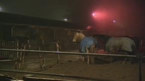 Brand in Rotterdam wordt twee paarden fataal