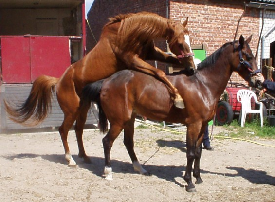 Olympische successen goed voor Nederlandse paardenhouderij