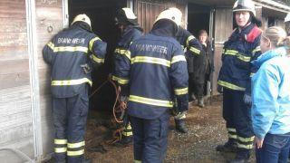 Brandweer helpt oude merrie weer overeind