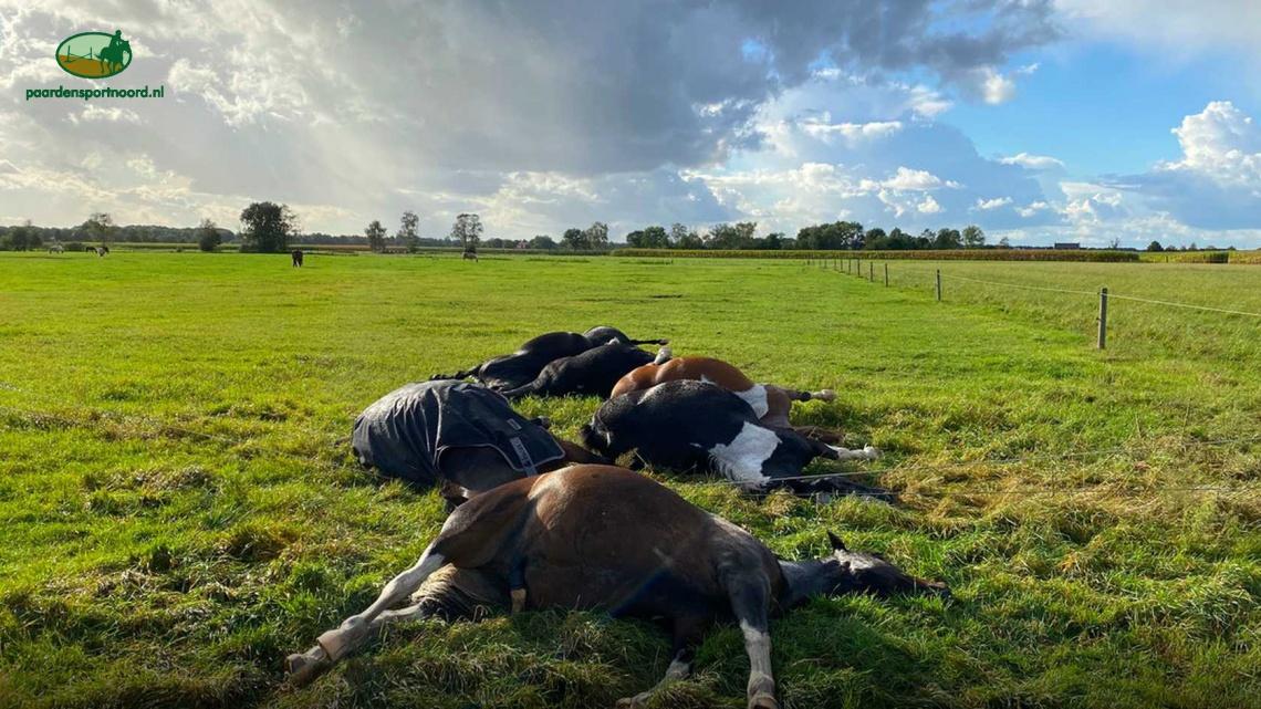 Zeven paarden sterven door bliksem in Maarheeze