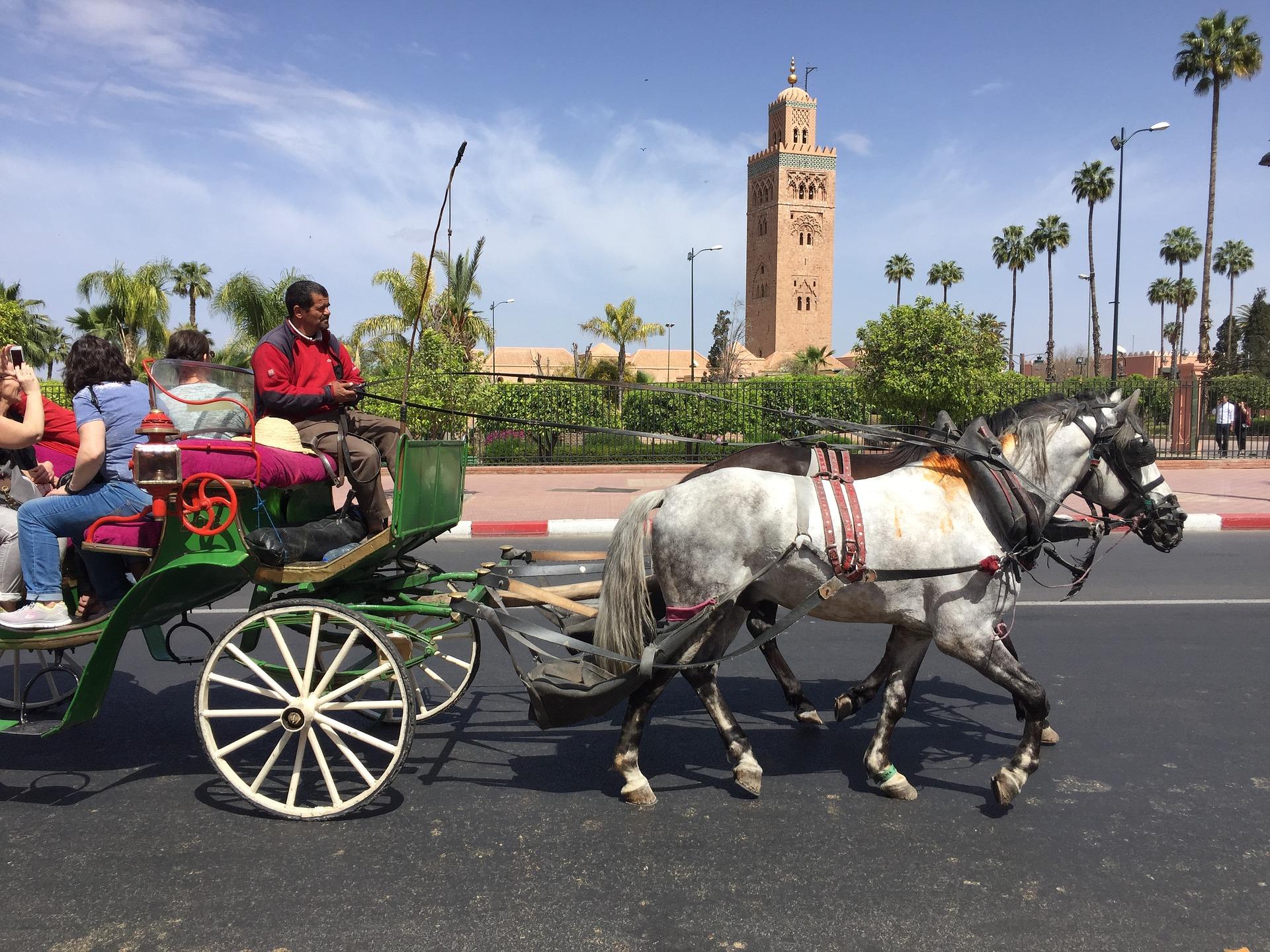 Marokkaanse koetspaarden verhongeren door coronacrisis