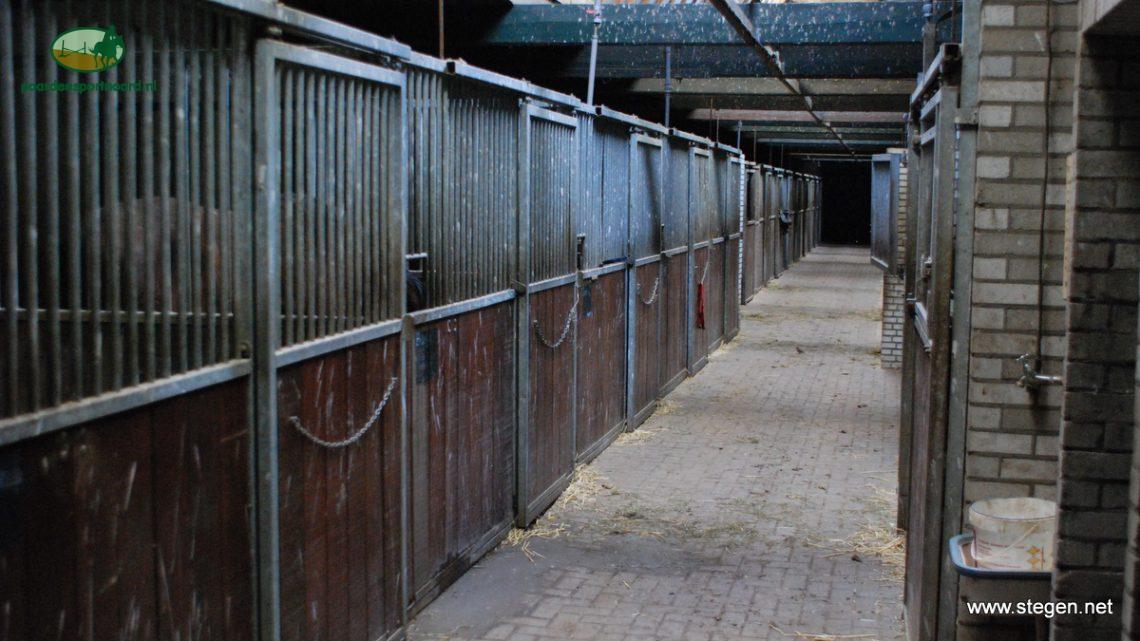 Rhinopneumonie op paardenbedrijf in regio Zwolle