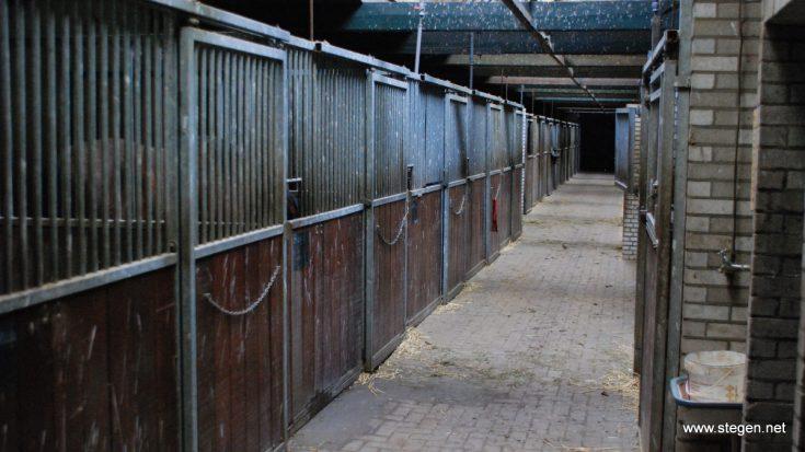 Op een locatie in de omgeving van Zwolle is rhinopneumonie vastgesteld.