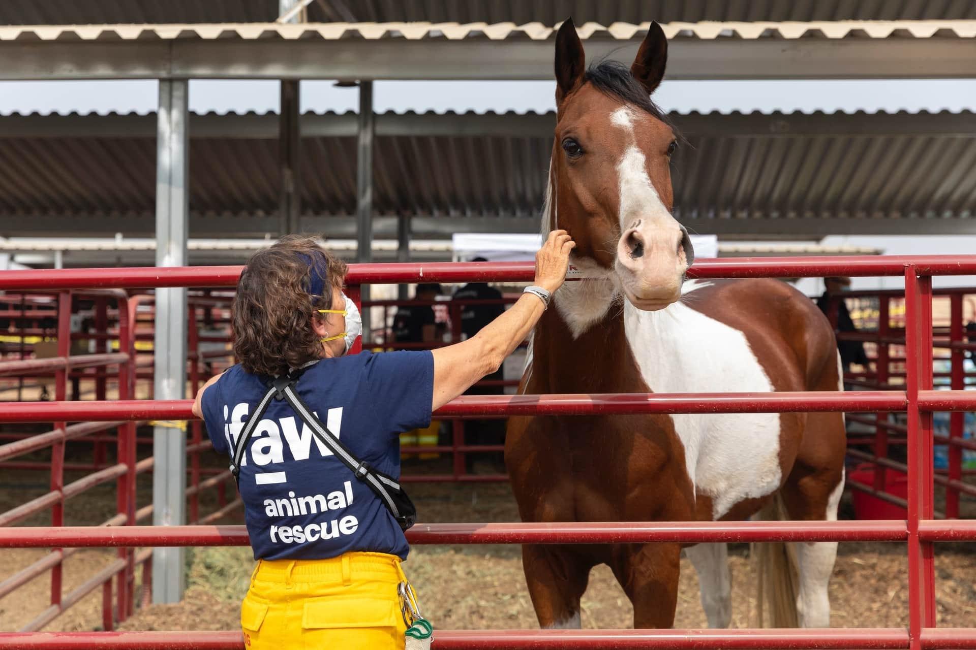 Meldsysteem voor besmettelijke paardenziekten in de maak