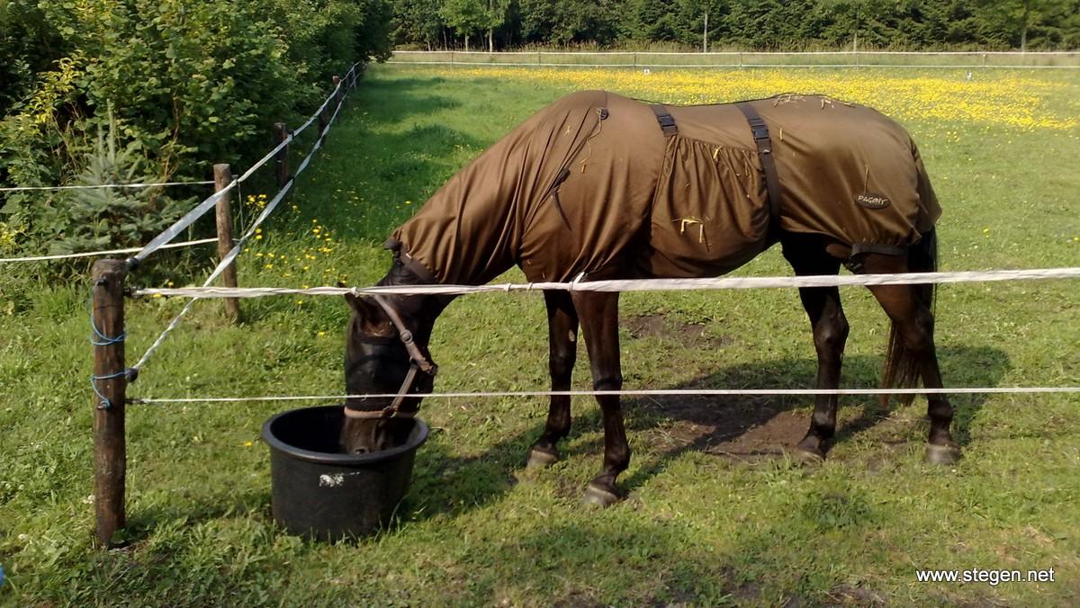Een paard in een weiland