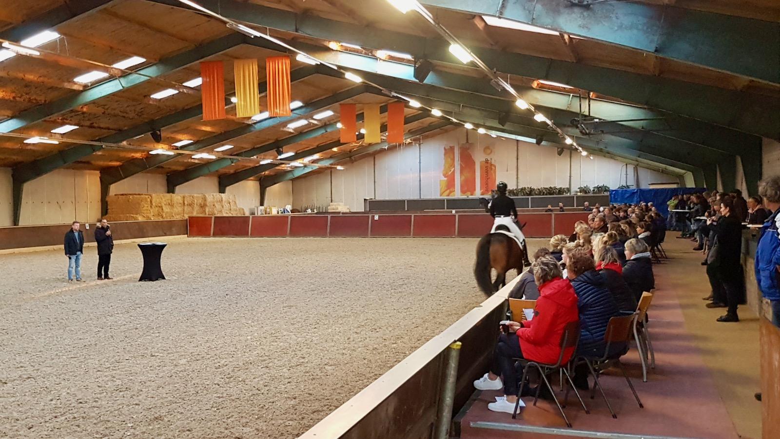 Bert Rutten: 'meeste jonge paarden te voorwaarts gereden'