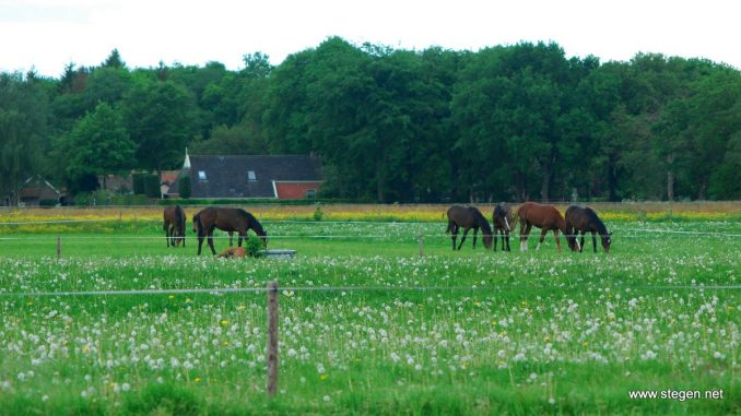 'Hippische sector belangrijk voor nieuwe gemeente in Westerkwartier'