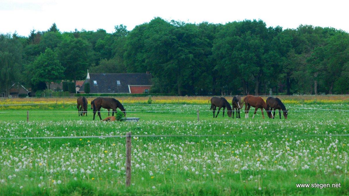 Kunnen onze paarden nog wel voldoende natuurlijk gedrag vertonen? De Partij voor de Dieren vindt dat weidegang het uitgangspunt moet zijn.