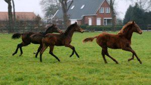 Sectorraad paarden krijgt meer duidelijkheid over laag BTW-tarief