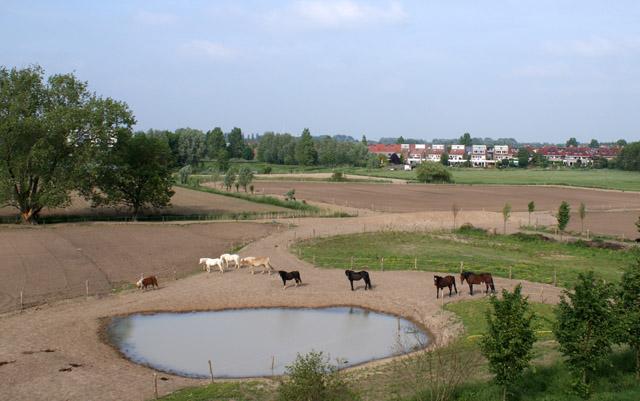 Arnhemse manege gaat 'anders' paarden houden