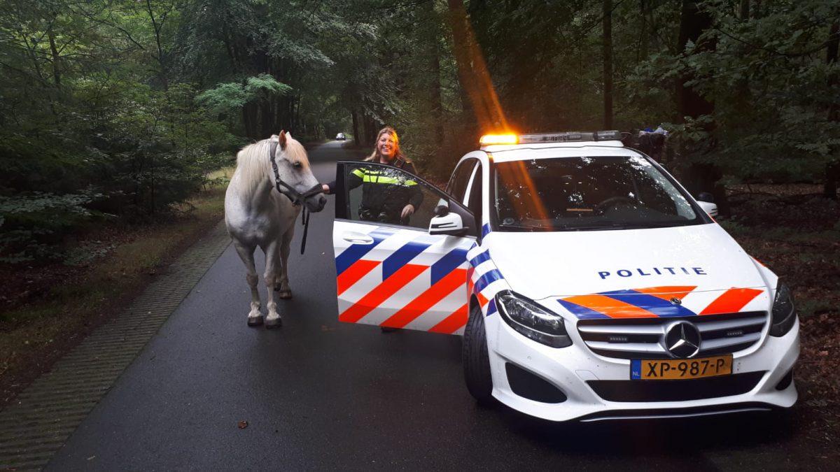 paard op hol politie