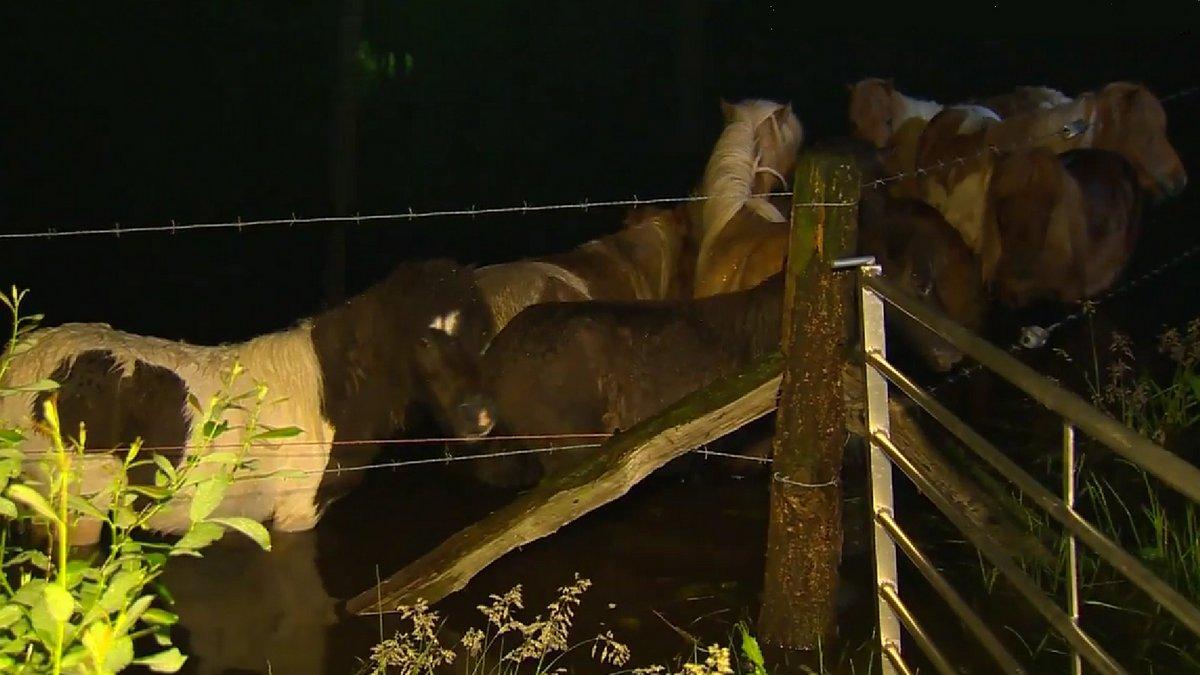 Brandweer redt pony's uit ondergelopen weiland bij Ommen