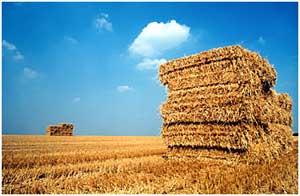 Prijzen voor hooi en stro razendsnel omhoog