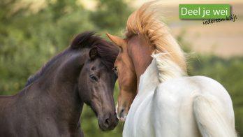 Campagne vraagt aandacht voor eenzaamheid bij paarden