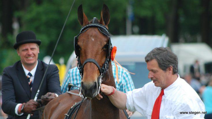 De tuigpaarden komen dit jaar opnieuw naar Exloo.