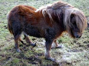 Stijging aantal verwaarloosde paarden in Engeland