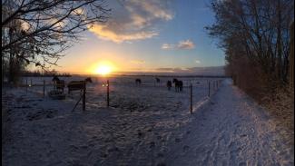 sneeuw - Valesca Pieters