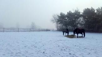 sneeuw - Frans de Jong.jpg