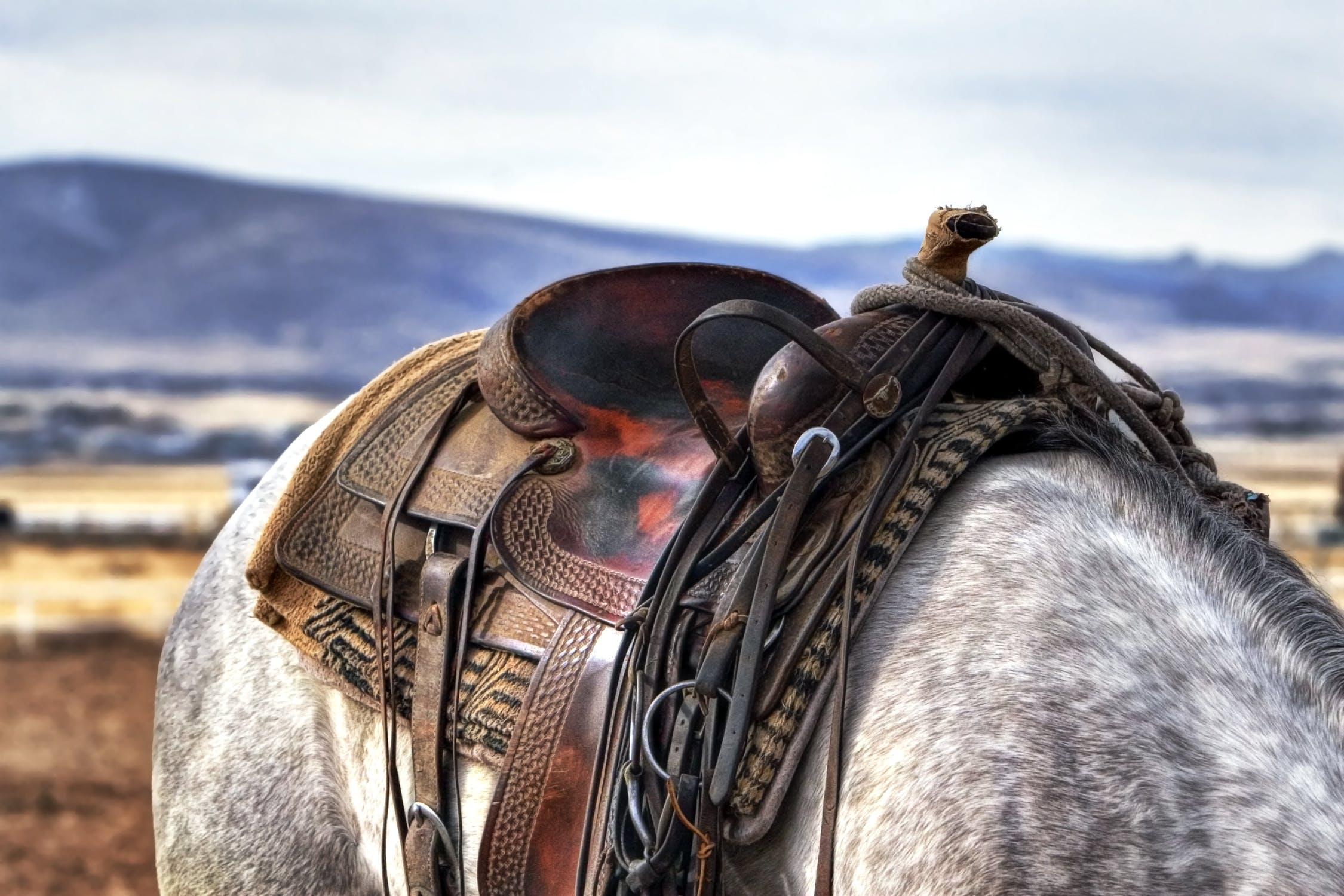 Zo kun je de spullen van en voor je paard goed opbergen en bewaren
